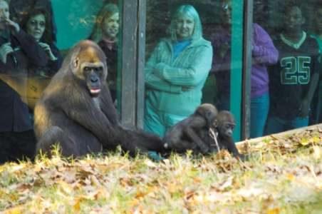 Controversy Behind Captivity
